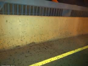 Massive mayfly swarm that emerged along Mississippi was so