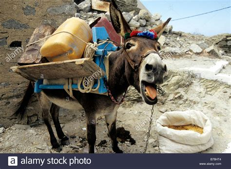 Donkey being disturbed while eating, mountain village