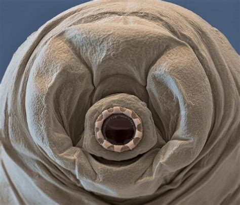 One of the coolest animals ever: The zen of Tardigrades