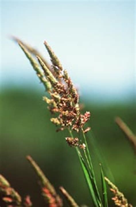 Tricks for identifying wild grasses -- Wisconsin Natural